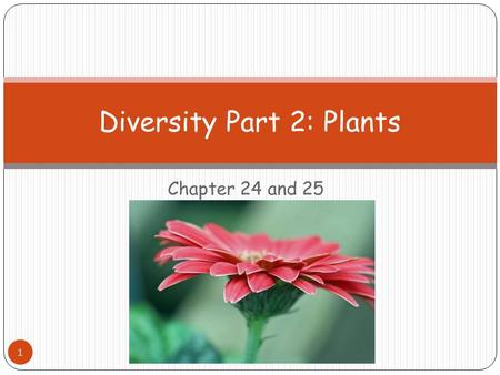 Chapter 24 and 25 Diversity Part 2: Plants 1. Photosynthesis Carbon Dioxide + Water  Glucose + Oxygen How does a plant obtain the carbon dioxide it needs.