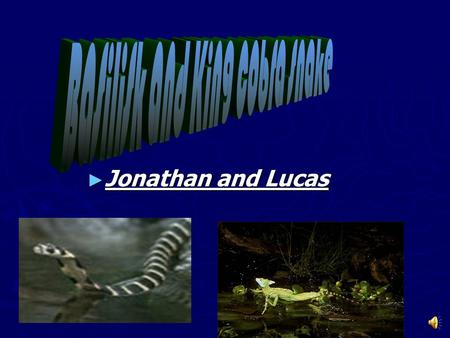► Jonathan and Lucas There are five different groups of animals with vertebrates. ► Mammals ► Reptiles ► Fish ► Amphibians ► Birds.