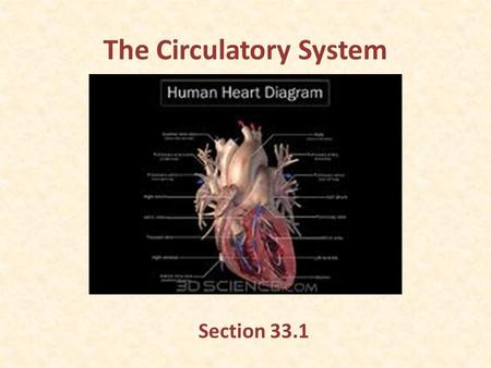 The Circulatory System Section 33.1. Functions of the Circulatory System Needed because the body has millions of cells. Transports nutrients, oxygen,