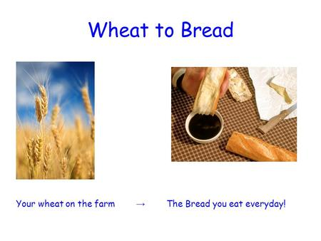 Wheat to Bread Your wheat on the farm → The Bread you eat everyday!