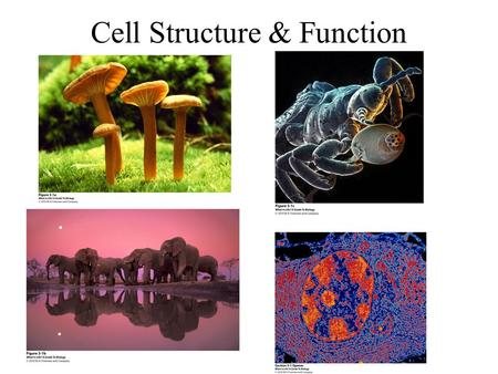 Cell Structure & Function. Take-home message 3.1  The most basic unit of any organism is the cell, the smallest unit of life that can function independently.