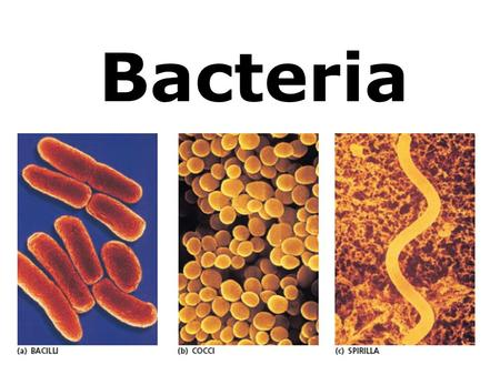 Bacteria. Classification Domain Archaea and Kingdom Archaebacteria …No peptidoglycan in cell wall …DNA similar to Eukaryotes …Harsh Environments.