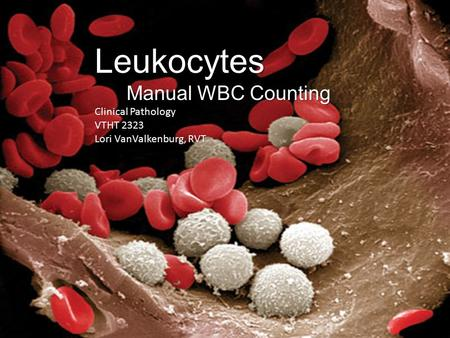 Leukocytes Manual WBC Counting Clinical Pathology VTHT 2323 Lori VanValkenburg, RVT.