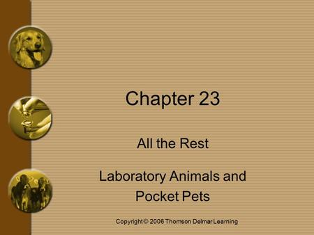 Copyright © 2006 Thomson Delmar Learning Chapter 23 All the Rest Laboratory Animals and Pocket Pets.