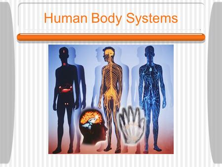 Human Body Systems. What is a system? A group of cells, tissues and organs that work together both physically and chemically to carry out a task.