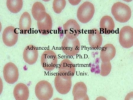 Cardiovascular System: Blood Advanced Anatomy & Physiology Tony Serino, Ph.D. Biology Department Misericordia Univ.