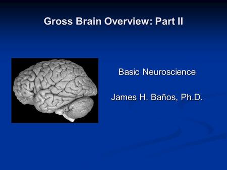 Gross Brain Overview: Part II Basic Neuroscience James H. Baños, Ph.D.