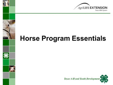Horse Program Essentials Texas 4-H and Youth Development.