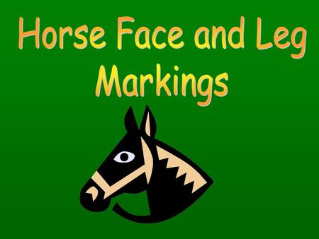 Paint Horse Markings Overo – Usually white will not cross the back of the horse between withers and tail. – Color is irregular, scattered or splashy.