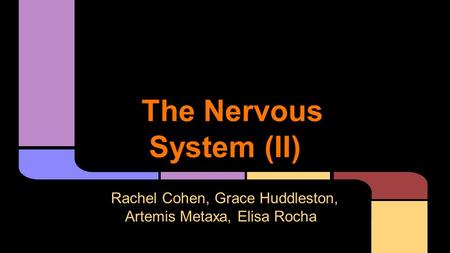 The Nervous System (II) Rachel Cohen, Grace Huddleston, Artemis Metaxa, Elisa Rocha.