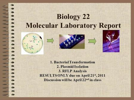 Biology 22 Molecular Laboratory Report 1. Bacterial Transformation 2. Plasmid Isolation 3. RFLP Analysis RESULTS ONLY due on April 21 st, 2011 Discussion.