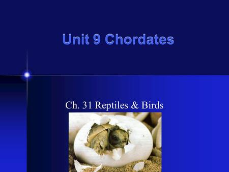 Unit 9 Chordates Ch. 31 Reptiles & Birds. What Is a Reptile? A reptile is a vertebrate that has dry, scaly skin, lungs, & terrestrial eggs with several.