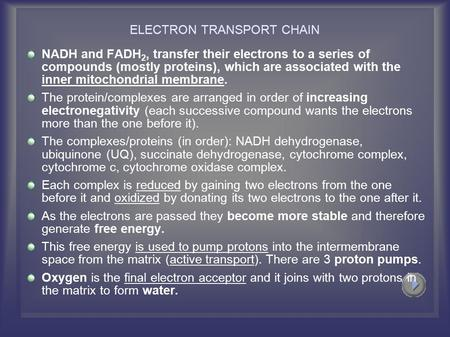 ELECTRON TRANSPORT CHAIN NADH and FADH 2, transfer their electrons to a series of compounds (mostly proteins), which are associated with the inner mitochondrial.