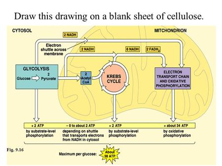 Copyright © 2002 Pearson Education, Inc., publishing as Benjamin Cummings Fig. 9.16 Draw this drawing on a blank sheet of cellulose.