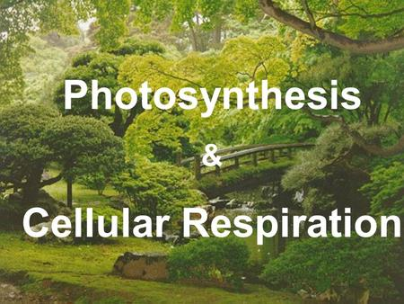 Photosynthesis & Cellular Respiration. Section 9-1: Energy in Living Systems 1.photosynthesis -the process by which plants, algae, and some bacteria use.