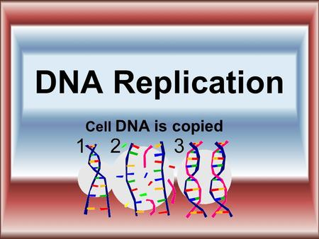 DNA Replication Cell DNA is copied. What is meant by DNA REPLICATION: Replicate means copy, or duplicate. DNA in cells must be copied exactly. During.