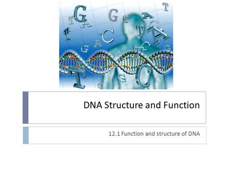 DNA Structure and Function 12.1 Function and structure of DNA.
