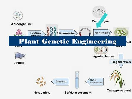 Plant Genetic Engineering. Genetic Engineering The process of manipulating and transferring instructions carried by genes from one cell to another Why.