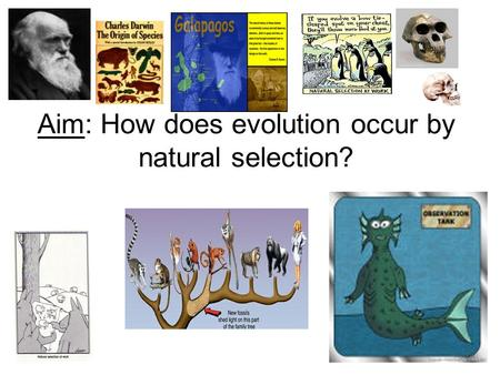 Aim: How does evolution occur by natural selection?