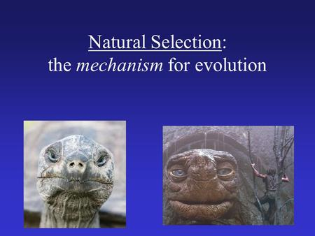 Natural Selection: the mechanism for evolution. Charles Darwin (1809 – 1882) I have called this principle, by which each slight variation, if useful,