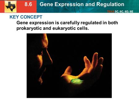 8.6 Gene Expression and Regulation TEKS 5C, 6C, 6D, 6E KEY CONCEPT Gene expression is carefully regulated in both prokaryotic and eukaryotic cells.
