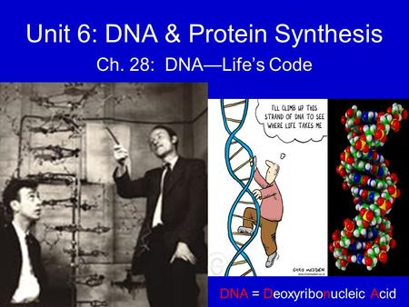 Unit 6: DNA & Protein Synthesis Ch. 28: DNA—Life's Code DNA = Deoxyribonucleic Acid.