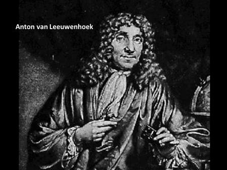 Anton van Leeuwenhoek. Anton van Leeuwenhoek (1600'S) -created 1 st microscope. He noticed that if he placed 2 magnifying lenses at proper distances from.