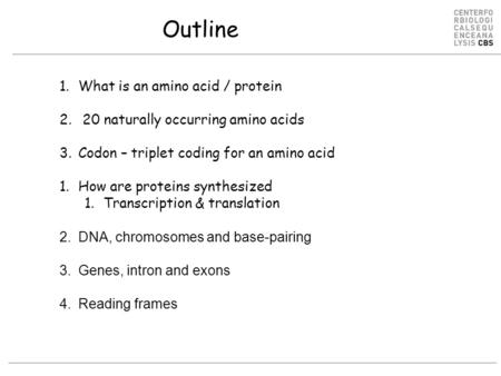Outline 1.What is an amino acid / protein 2. 20 naturally occurring amino acids 3.Codon – triplet coding for an amino acid 1.How are proteins synthesized.