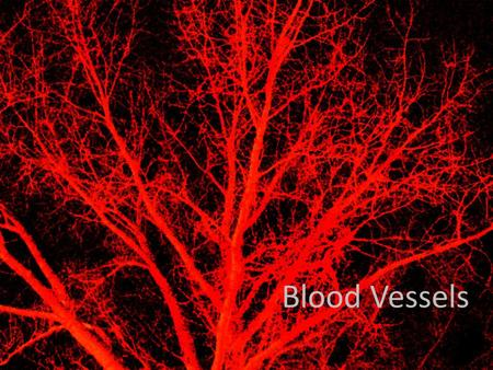Blood Vessels. Learning Objectives: Compare and understand the difference in the structure and function of Arteries Veins Capillaries.