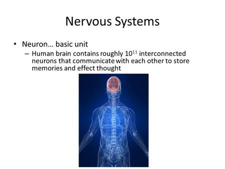 Nervous Systems Neuron… basic unit – Human brain contains roughly 10 11 interconnected neurons that communicate with each other to store memories and effect.