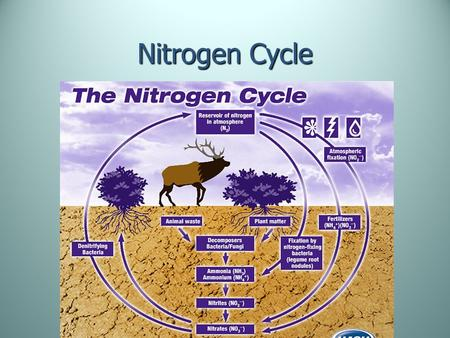 Nitrogen Cycle. Nitrogen Most abundant element in the atmosphere 78% of the air we breathe is N ₂.