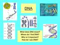 DNA What does DNA mean? Where do I find DNA? Why is it important? How do I use DNA?