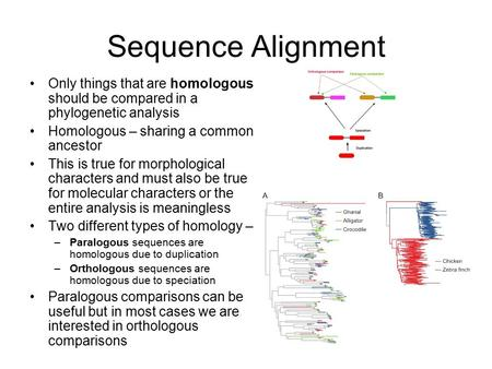 Sequence Alignment Only things that are homologous should be compared in a phylogenetic analysis Homologous – sharing a common ancestor This is true for.