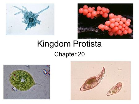 Kingdom Protista Chapter 20. General Characteristics of Protists: ALL Eukaryotes that cannot be classified as a plant, animal, or fungus. They have a.