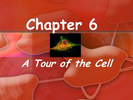 Chapter 6 A Tour of the Cell. Things to Know The differences between eukaryotic and prokaryotic cells The structure and function of organelles common.