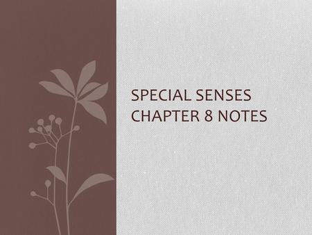 SPECIAL SENSES CHAPTER 8 NOTES. External Eye Eyelids Eyelashes Meibomian glands Ciliary glands Conjunctiva Lacrimal apparatus Six extrinsic eye muscles.