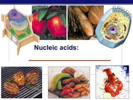 Regents Biology 2006-2007 Nucleic acids: ______________________.