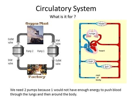 Circulatory System What is it for ? We need 2 pumps because 1 would not have enough energy to push blood through the lungs and then around the body.