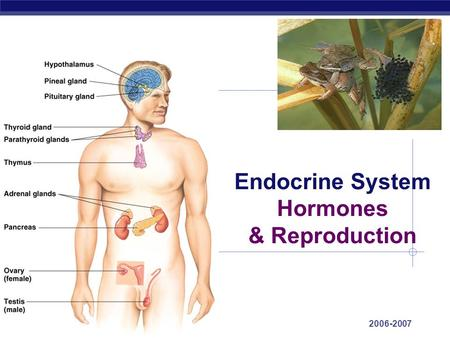 AP Biology 2006-2007 Endocrine System Hormones & Reproduction.