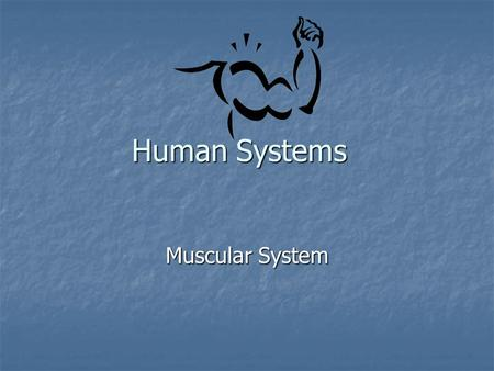 Human Systems Muscular System. Definition: Definition: All the muscles in your body All the muscles in your body Muscles: Muscles: Body tissue that can.