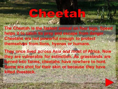 The Cheetah is the fastest animal on four legs. Speed helps it to catch its prey and escape from danger. Cheetahs are not powerful enough to protect themselves.