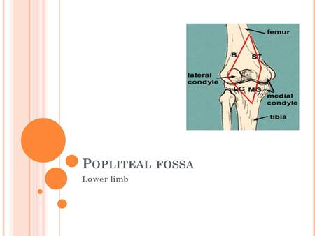 P OPLITEAL FOSSA Lower limb. P OPLITEAL FOSSA The popliteal fossa is a diamond-shaped intermuscular space situated at the back of the knee The popliteal.