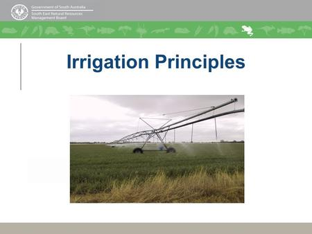 Irrigation Principles. What is Irrigation Efficiency? Irrigating efficiently means: applying the right amount of water, at the right time, evenly and.