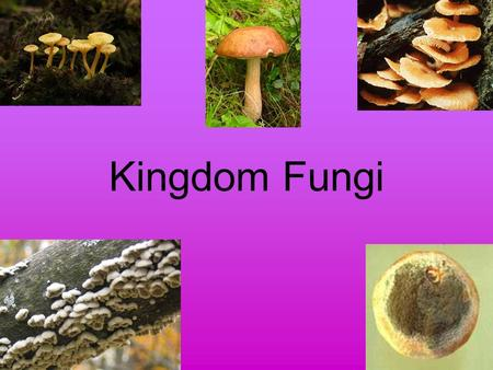 Kingdom Fungi. Eukaryotic Heterotrophs (decomposers) Cell walls made of chitin –Complex carbohydrate also found in the external skeletons of insects.