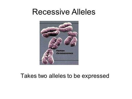 Recessive Alleles Takes two alleles to be expressed.