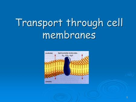 1 Transport through cell membranes. Cell Membrane.