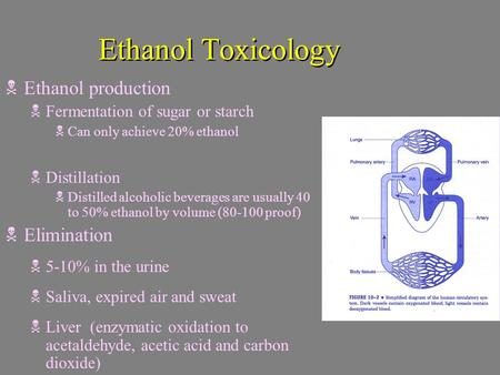 Ethanol Toxicology  Ethanol production  Fermentation of sugar or starch  Can only achieve 20% ethanol  Distillation  Distilled alcoholic beverages.