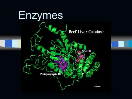 Enzymes. n Catalytic proteins n Catalyst - a chemical agent that changes the rate of reaction, without being consumed by the reaction.