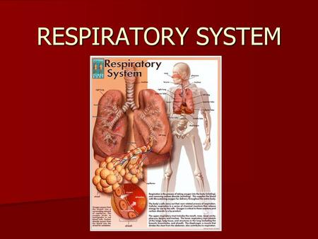 RESPIRATORY SYSTEM. What is the Purpose of the Respiratory system? The purpose of the respiratory system is to bring oxygen into the blood and to remove.