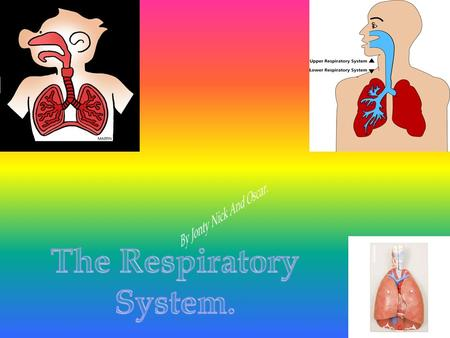  Did you know that the that there is a right lung and a left lung.  Also the left lung has 2 lobes and the right lung has 3 lobes.  What the.